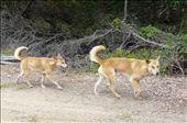 Dingo's: by mattandnetty, Views[389]