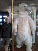 The Bundaberg Bear: by mattandnetty, Views[470]