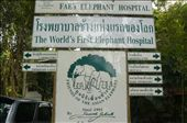 Elephant Hospital Lampang: by mattandnetty, Views[395]