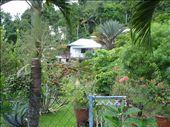 un petit aperçu du jardin: by maud-pierre, Views[238]