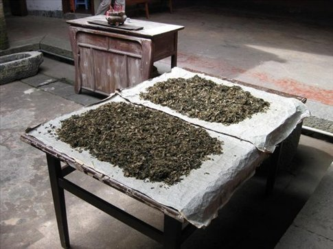 Green tea leaves set out to dry.