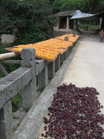 Drying persimmons and rose fruits.