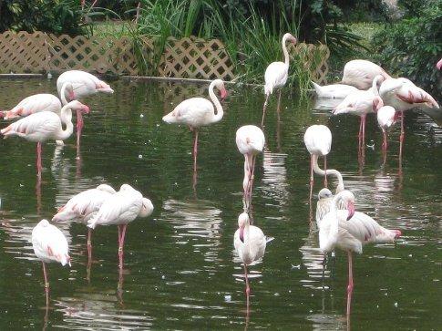 Pretty flamingos in Kowloon Park.
