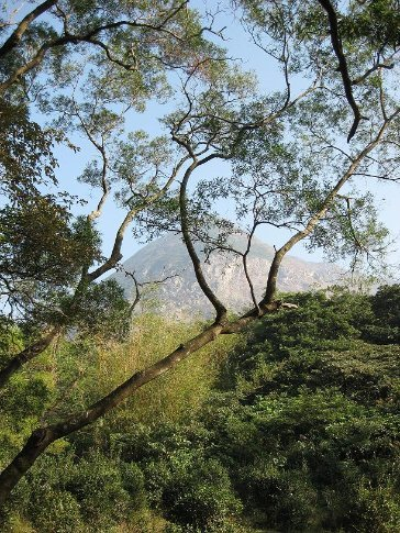 Took this on the bush walk down Wisdom Trail. You can see Lantau Peak in the background.