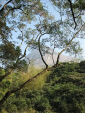 Took this on the bush walk down Wisdom Trail. You can see Lantau Peak in the background.: by mazystar, Views[173]