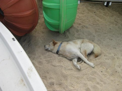 Don't worry, he was only sleeping! :)