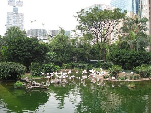 Kowloon Park - an oasis in the middle of the city.