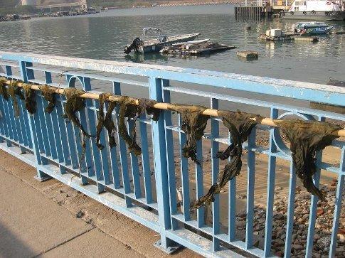Seaweed drying on Sok Kwu Wan pier, Lamma Island.