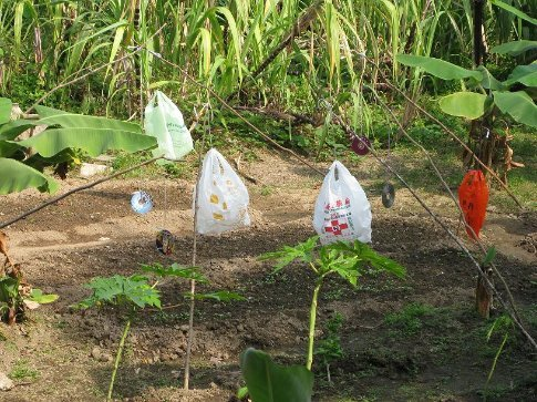 CD's and plastic bags used to keep birds from the crops. Mo Tat Wan village, Lamma Island.