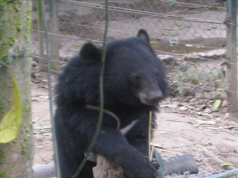 Cute moon bears that were in an enclosure within the waterfall park.