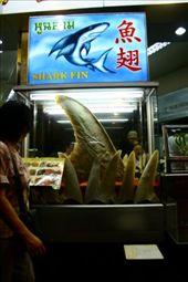 Sharks fin: by mcgurk77, Views[262]