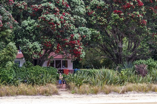 Many of the inhabited islands are privatly owned and the nornmal sole occupants of the islands are caretakers, here seen waiting for their post / supplies delivery for the day. Note the beautiful red Pohutukawa trees in full bloom, a common and prolific sight in the islands and NZ during summer.