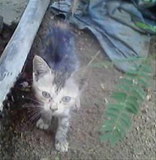 The Courageous Kitten