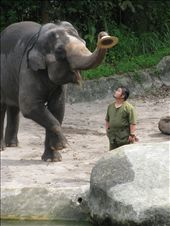 Asian Elephant Show: by me, Views[24]