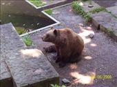 Bear pit in Bern: by mel, Views[254]