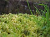 A forest of moss.  : by melissa, Views[125]