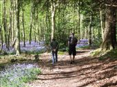 Cathy and Aidan enjoying the sight and smells of bluebells.  : by melissa, Views[187]