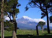 mt. taranaki again, framed by trees: by melissa, Views[220]