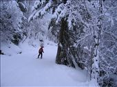 Aidan leading the way through a snow covered forest.  Most of the skiing was above tree-line, so this was a new sight.: by melissa, Views[192]