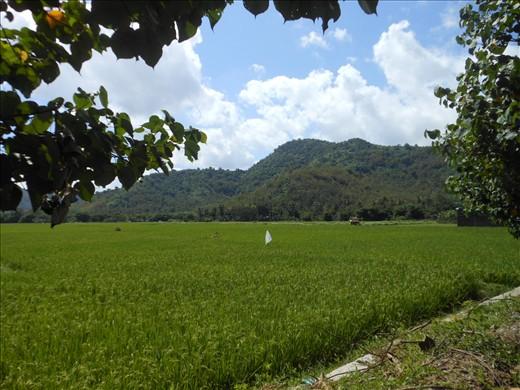 Padi fields near Dompu