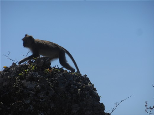 Our simian friend