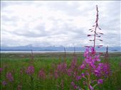 Looking from Canada into Alaska: by messa01, Views[177]