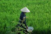 Rice farmer: by messenger, Views[167]