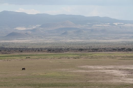 A lone elephant walks across the barren savannah of Amboseli.
