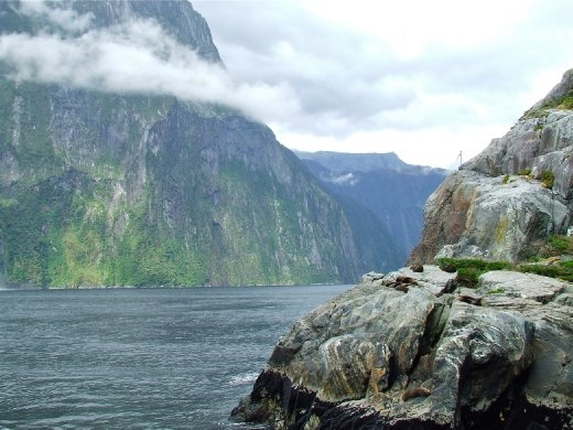 The next channel we traversed opened up to the full might of Milford Sound. Nothing seems more peaceful than to be asleep on the cliff edge as a happy seal enjoying his surrounds.