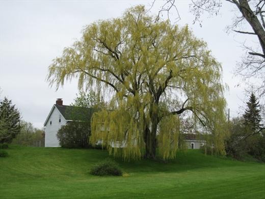 Hanging around Prince Edward County, ON