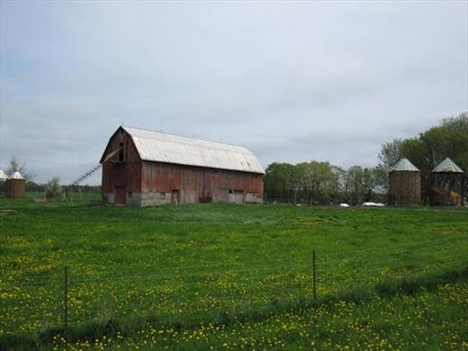 Farm, Prince Edward County, ON