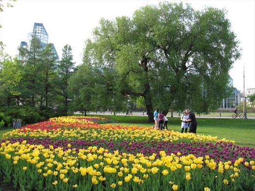 Tulip Festival!