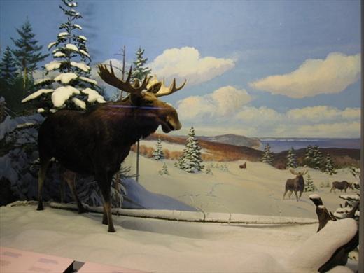 Canadian Museum of Nature, Ottawa.
