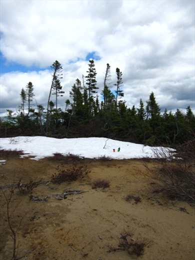 Sand, snow, pines.. but where the hell I am?!