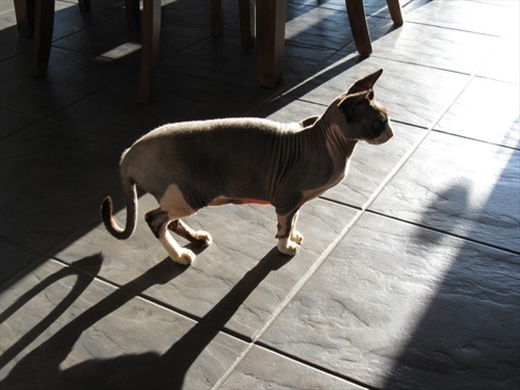 The Egyptian cat of Maxime!