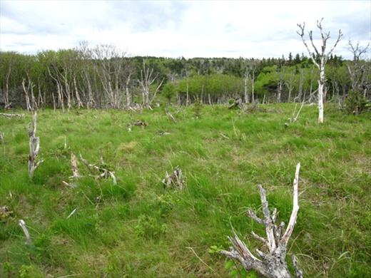 Skyline trail, Cape Breton Island National Park, NS