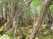 Parc National de la Gaspesie, QC : by michelefacciotto, Views[153]