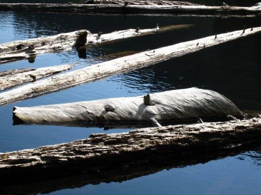 Logger's Lake, BC