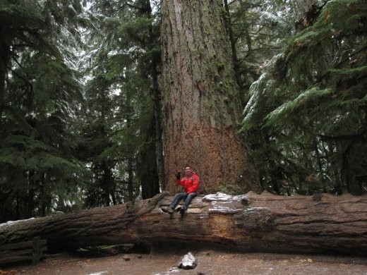 Cathedral Grove, Mac Millian Provincial Park, BC