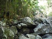 Kondalilla National Park: by michidoesoz, Views[44]