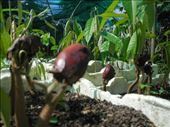 durian babies!: by michidoesoz, Views[143]