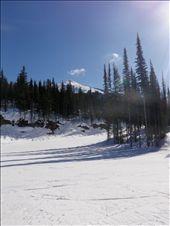 Revelstoke Mountain: by michy, Views[177]