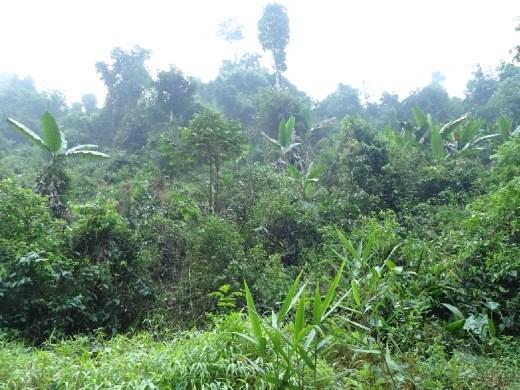 y más selva