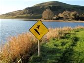 At Lough Gur - According to this, you can walk on water: by milko_rosie, Views[189]
