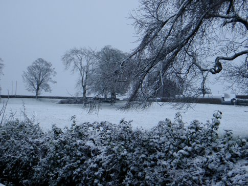 Another snowy field in Littleton, Co. Tipperary. Very pretty.