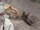 The Brown Bears at Skansen (mum and cub).: by milko_rosie, Views[195]