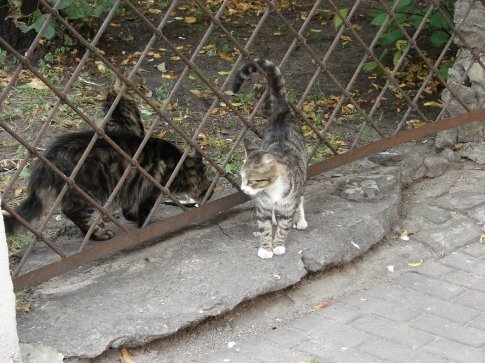 A few of Riga's resident alley cats. They were just fed some fish by a local.