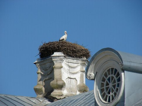 A stork who made his nest on a chimney top at Rundale Palace.