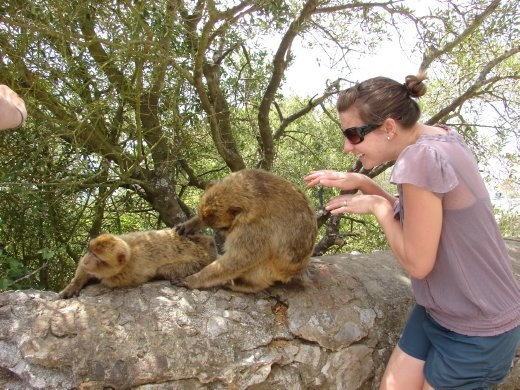 Em helps with the cleaning of the Barbury Macaques on the rock.