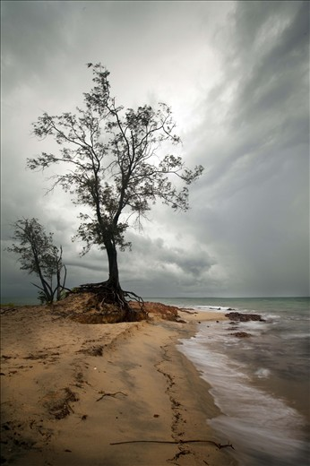A lonely tree weathers the Sea and all nature has to through at it. Town beach or Gadalathami as it is locally known, is home to this sturdy tree. The tree roots are imbedded into the porous rock that is prevalent through out the area which is extensively mined for bauxite.